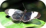 Picture of butterfly.